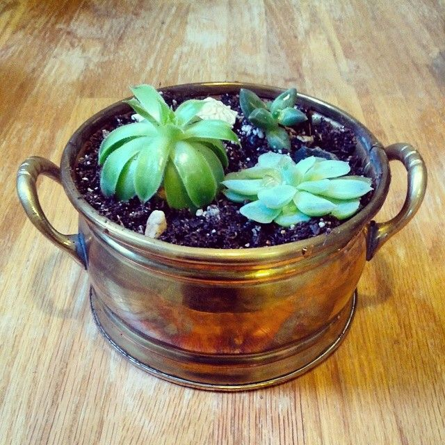 Finally got around to replanting my #vandusengarden plant sale #succulents into my #thrifted #vintage #brass containers! #wilsonandlou #upcy...
