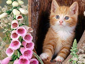 Allah'ın Rahman ve Rahim sıfatlarının hayvanların ve bitkilerin yaratılışındaki tecellileri Video