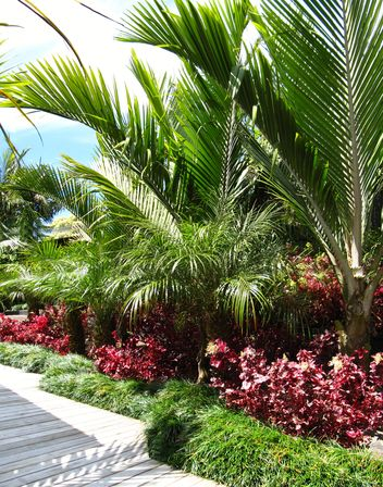 Layered sub tropical palm garden seed landscapes garden for Garden landscape ideas nz