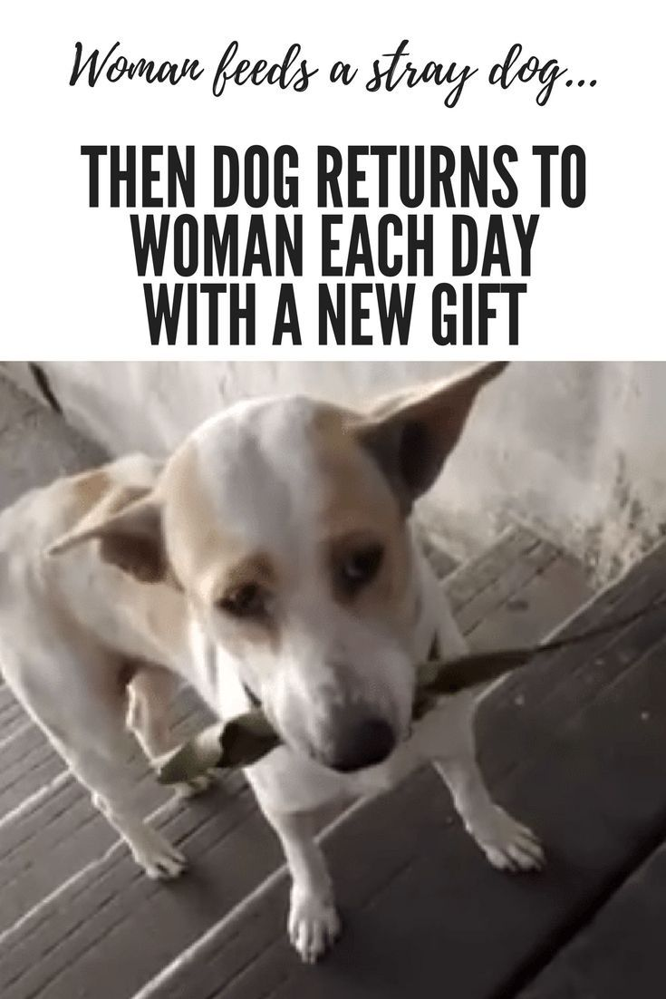 Woman Feeds A Stray Dog Then Dog Returns To Woman Each Day With A New Gift Dogs Dog Quotes Stray