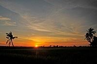 Sunset over Sekinchan, Selangor, Malaysia (thumbnail)
