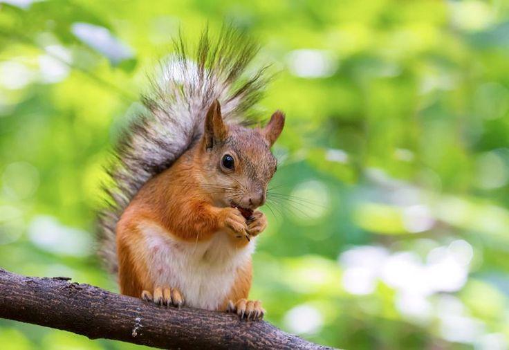 Животные и природа, фотографии
