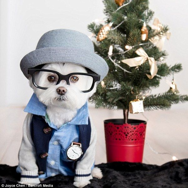 Chú cún fashionita với phong cách sành điệu nhất quả đất - Ảnh 6.
