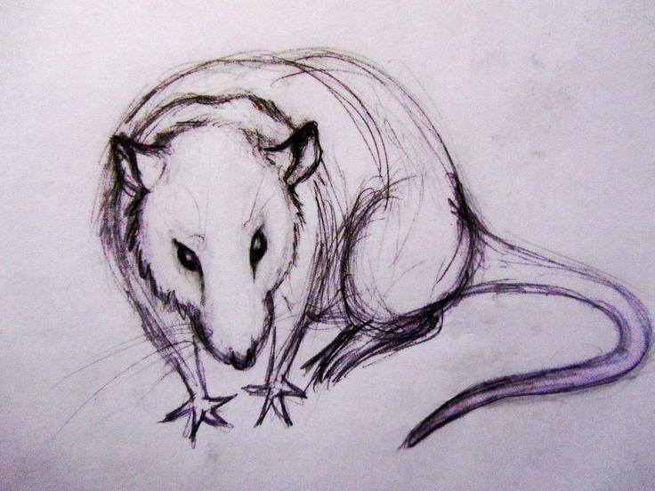 рисунки животных крысы или