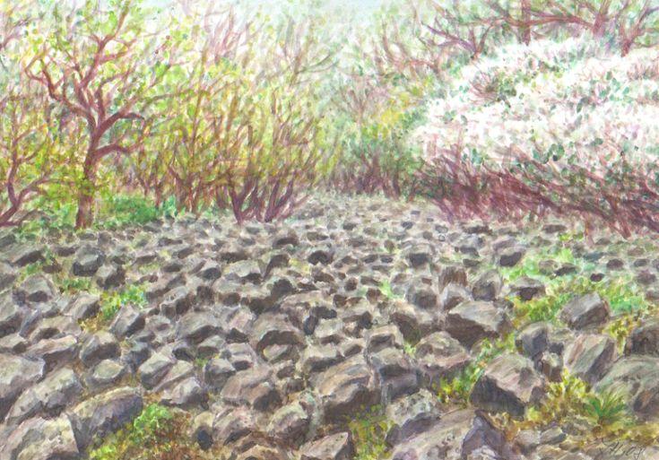 Kamenná suť na Lovoši, akvarel Jana Haasová
