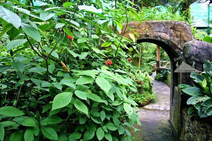 Hidden path in the city 💙ممر سري في المدينة   #تصويري #مدونة #سفر #سافر #مسافرون #مسافرون_العرب #مغامرات_من_الشرق__الى_الغرب  #كوالامبور #ماليزيا #حدائق #حديقة_الفراشات #حديقة_الفراشات_ماليزيا #فراشة  #easttowestadventures #travelblogger  #travelphotographer #blogger #malaysia #kualalumpur #gardens #thingstodo #thingstodoinkualalumpur #butterflygarden #butterfly
