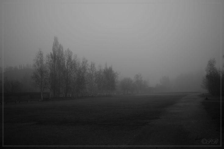 Landschaftspark im Nebel