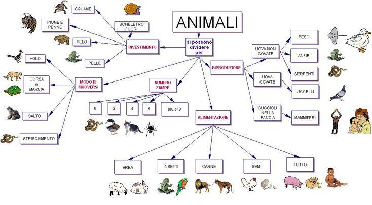 classificazione animali - Cerca con Google