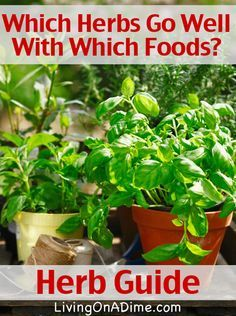 Herb Guide - Which Herbs Go Well With Which Foods? 12 Herbs and the foods they work well with! You will never have to guess again!