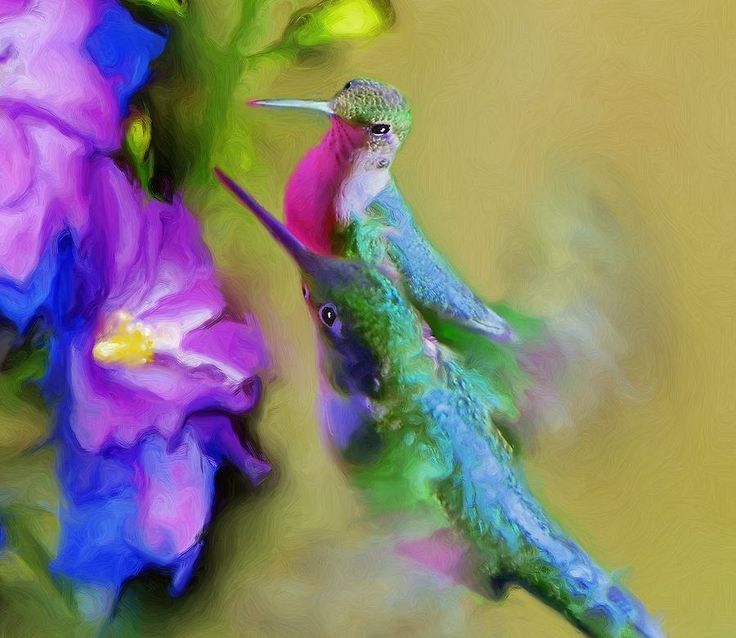 Top 19 ideas about hummingbirds on Pinterest | Photographs ...