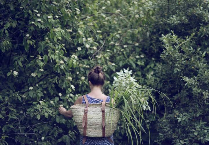 basket forest