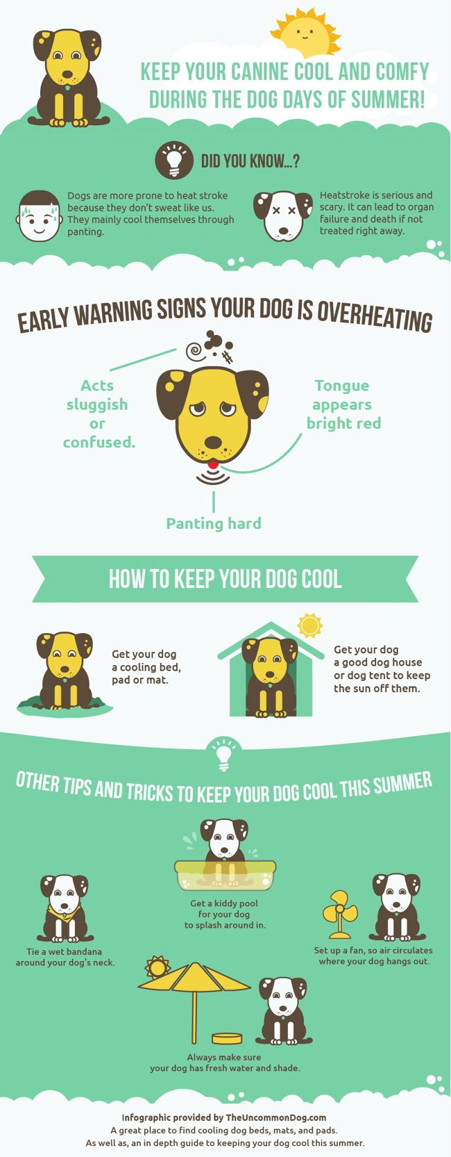Help your dog beat the heat Summer heat can be deadly for dogs. And it's already been a long, hot summer.Help keep your dog safe with these great tips from theuncommondog.com