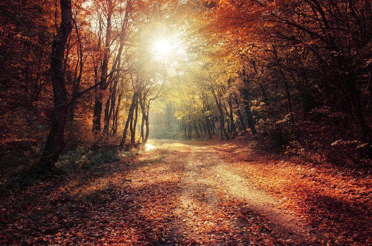 "Autumn Walk XXVII. - <a href=""http://realitydream.deviantart.com/"">deviantArt</a> | <a href=""https://500px.com/realitydream"">500px</a> | <a href=""https://www.facebook.com/RealityDream.photography/"">Facebook</a> | <a href=""https://www.instagram.com/realitydream/"">instagram</a> | <a href=""https://www.flickr.com/photos/76913284@N06/"">flickr</a>"