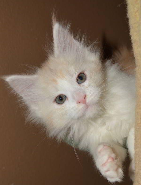 Pin On Purry Purry Little Orange Cat