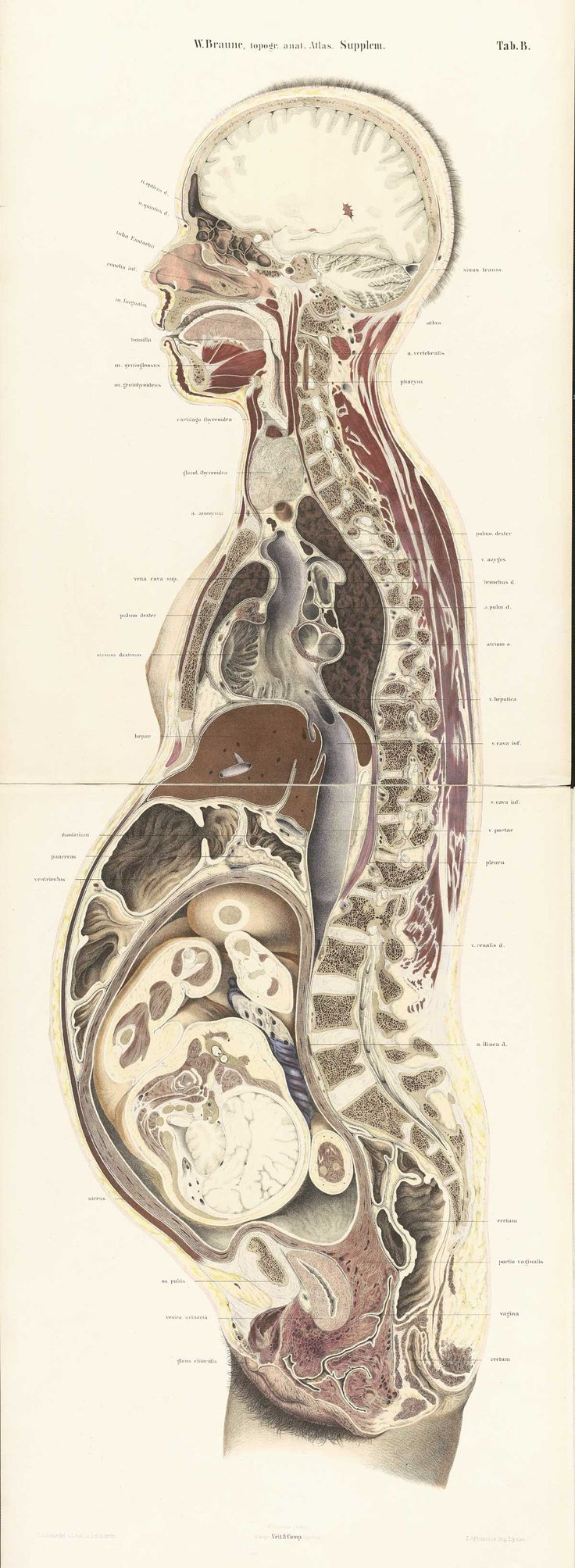 247 best Anatomy images on Pinterest | Anatomy reference, Human ...