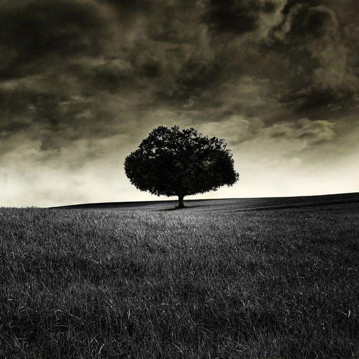 Dark Lonely Tree HD iPad Wallpaper Depression