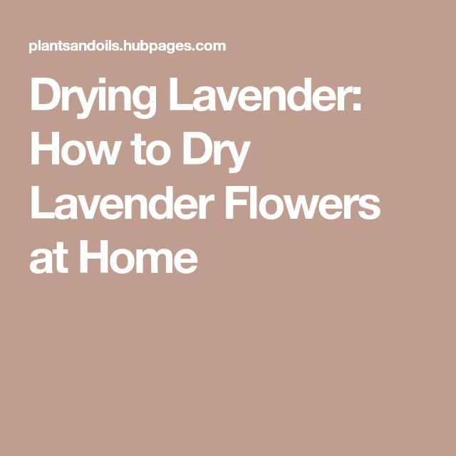 Drying Lavender: How to Dry Lavender Flowers at Home