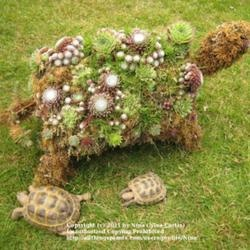 1000 images about Outdoor Turtle Stuff on Pinterest