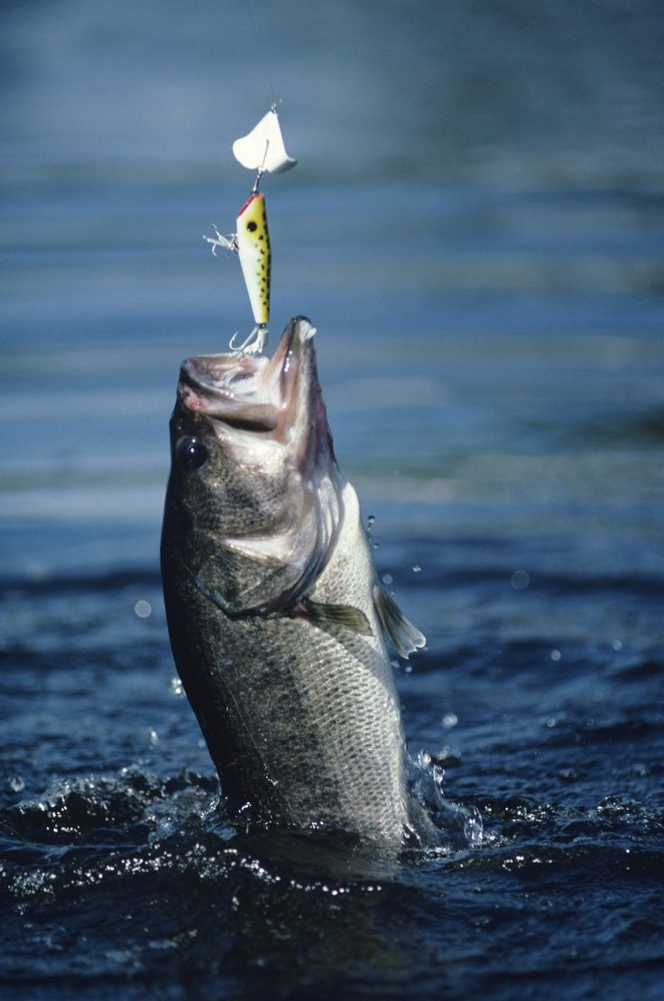 1000 ideas about fishing for bass on pinterest bass for Best time to go bass fishing