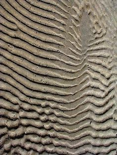Patterns in Nature - Patterns - LibGuides at Melbourne High School