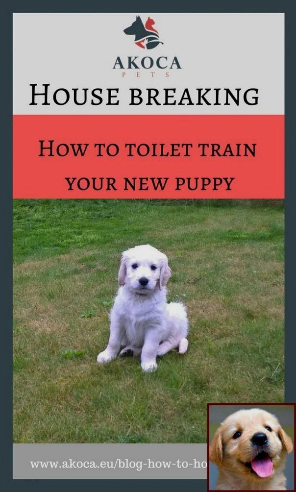 House Training A Puppy With Pads And Clicker Training Dogs For