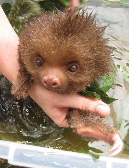 Baby sloth bath