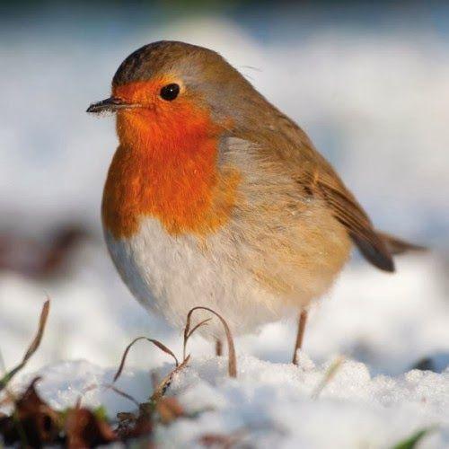 22 Best Birds Wallpapers Images On Pinterest