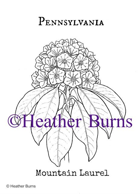 pennsylvania state flower coloring pages - photo#18