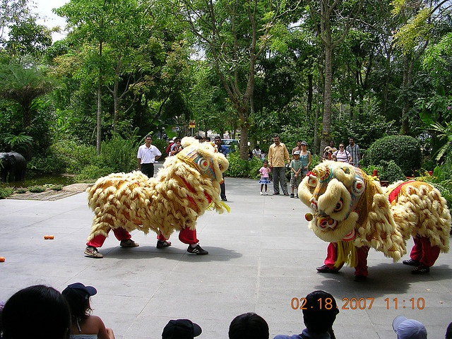 Lion Dance in singapore....The costume was worn by a pair one in head and other to show legs.  The dance is traditionally accompanied by gongs, drums and firecrackers, representing the descent of good luck.  The lion dance originated in China close to