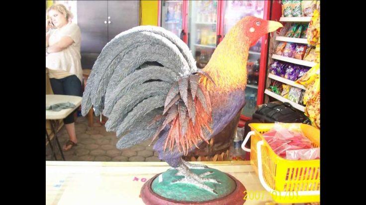 gallo de pelea kelso