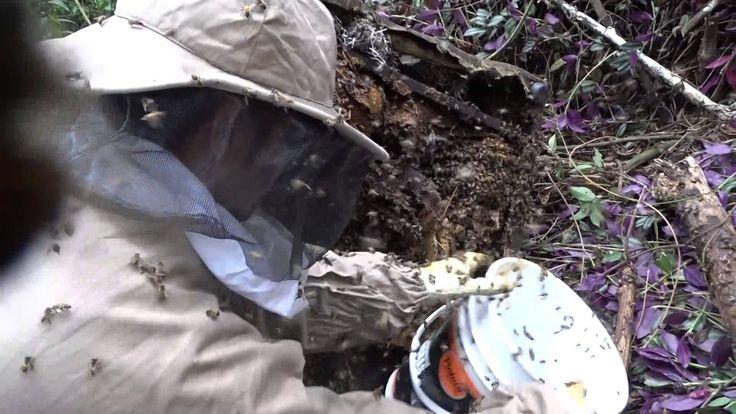 Salvemos a las abejas #SOSabejas