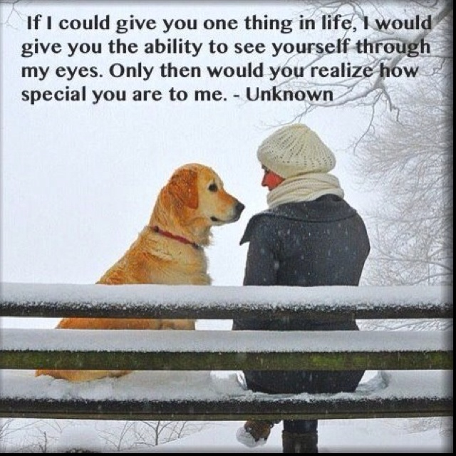 nice: Puppies, Best Friends, Quotes, Pets, Dogs Lovers, Animal, Wall Photos, Golden Retriever