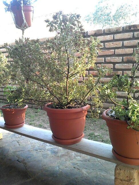 jardin ideas paracan