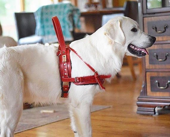 Service Dog Harness In Brown Leather With Custom Handle For
