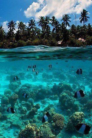 Мальдивы - рай на земле! / Путешествие с комфортом