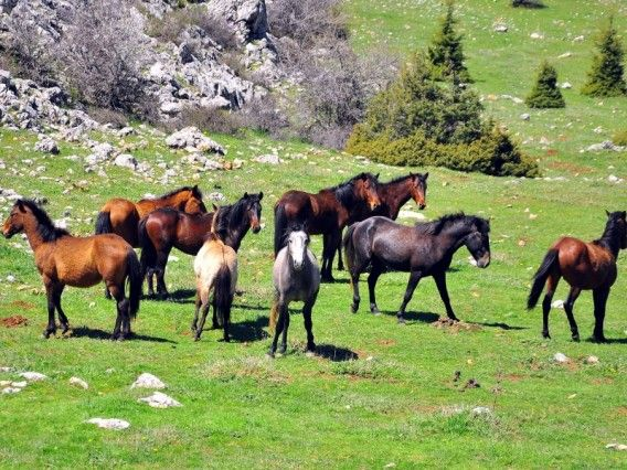 Spil Mountain National Park, Manisa