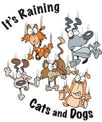 Αποτέλεσμα εικόνας για pictures of raining cats and dogs
