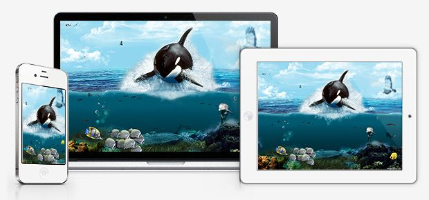 katil balina - orca - wallpaper