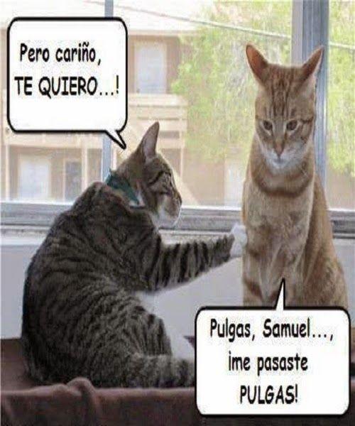 Matrimonio de Gatos como la vida misma #humor #chistes # ...