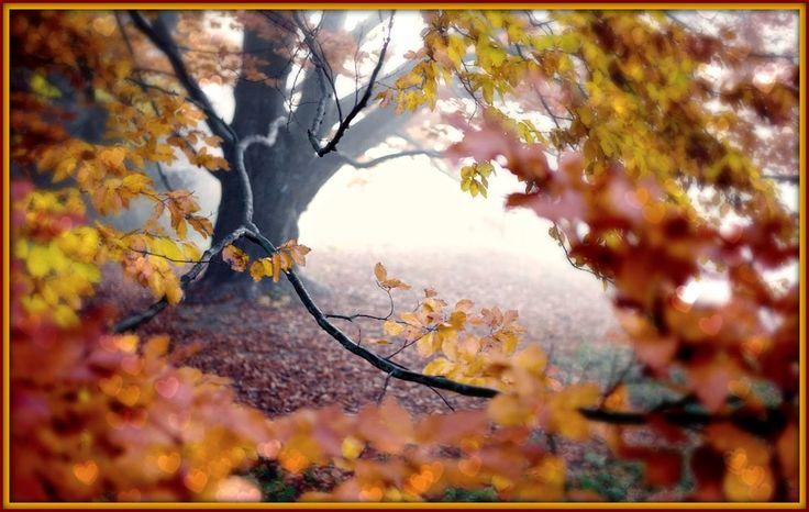 Γη και Ελευθερία.: Τα Χειρόγραφα του Φθινοπώρου...