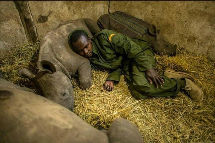"""""""Protecting the ones you love with your life"""". Un ranger in Kenya dorme di fianco ad un cucciolo orfano di rinoceronte che sta proteggendo. (photo credit: Put Foot Rally) #Kenya"""