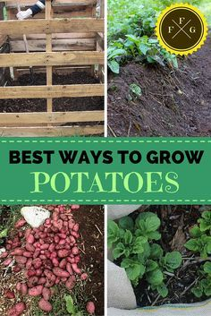 Which Is The Best Method To Grow Potatoes The O Jays 400 x 300
