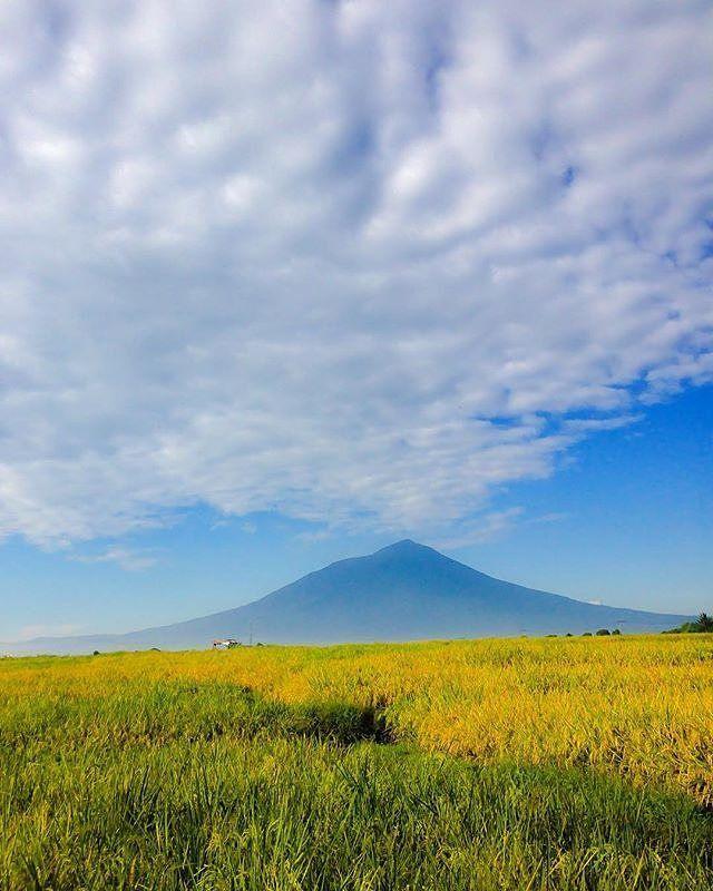 Gunung Cikuray,Berdiri tegap dan menjulang tinggi bagai monumen . . Foto dari @abanz_sharcky,terima kasih telah menandai kita,keep discover Garut The Preanger Paradise.  Selalu jaga lingkungan ini saat anda berkunjung ke daerah ini, be a #ResponsibleTraveller.  Lokasi Kabupaten Garut.  Untuk informasi mengenai pariwisata Garut kunjungi kami  di www.jelajahgarut.com.  #JelajahGarut #ExploreGarut #WisataGRT #Garut #cikuraymountain #Jawabarat #Westjava #Indonesia #light#glorius #discoverearth…
