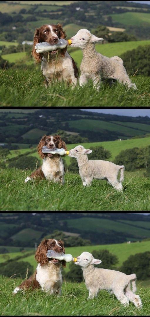 Veja amizades improváveis, mas muito fofas, entre animais - Fotos - UOL Notícias