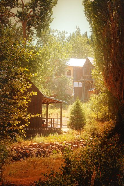 Ghosts of Silver City, Idaho... Im guessing nature took it back... Beth! Here is your cabin!