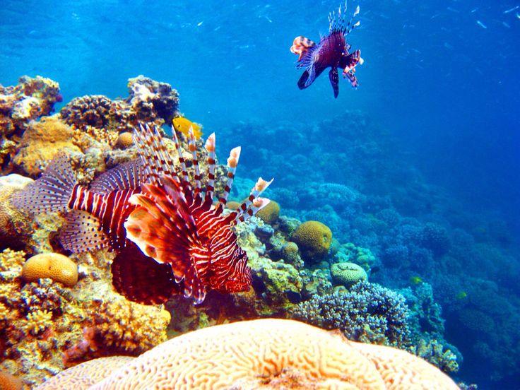 Beautiful sea Makadi Bay