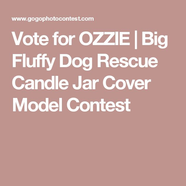 Vote for OZZIE   Big Fluffy Dog Rescue Candle Jar Cover Model Contest