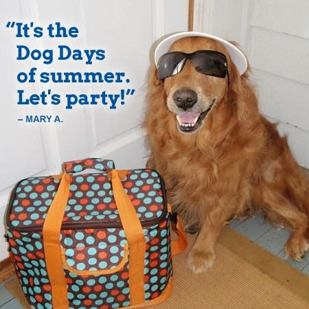 21 Best Images About Dog Days Of Summer Camp Theme On