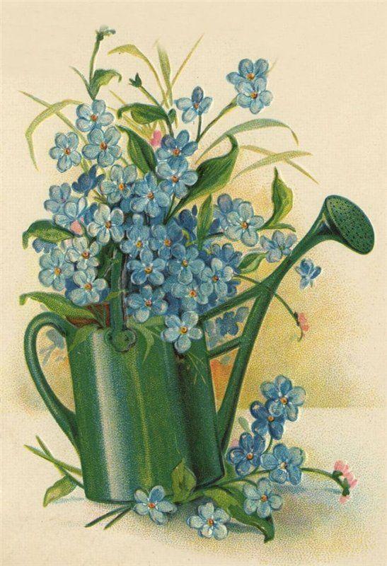 Открытки цветок юности, хорошего