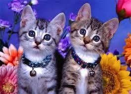 gatos fofos e engraçados